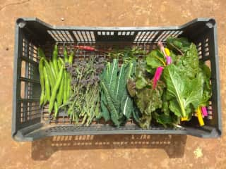 Fresh produce throughout the year