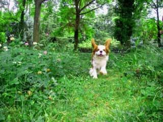 Meet Darling, an adorable and lively King Charles. We did amazing walks along the Rhône. He was so happy, I miss him.
