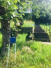 garden - stairway