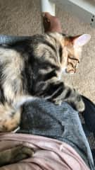 """Our newest """"foster-failed"""" addition to our family – Monkey! He went from being a skittish shelter cat to purring lap kitty."""