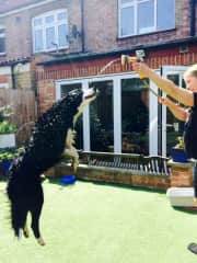 Our very special border collie TrustedHousesitters friend Flynn from London