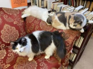 Cuddly cats at our favorite bookshop
