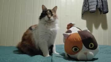 our cute cat named Agate with her stuffed brother