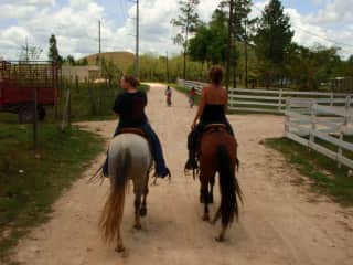 Exercising horses at the Finca