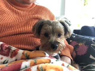 I have experience with many breeds and temperments, like ella here who is a little bit anxious but we love to sit together :)