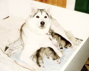 Widow and her adorable pups in Holland