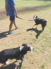 Walking with Yoko and Moncho