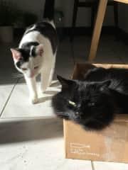 Tikka & Bimbo