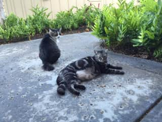 Boy Cat (center)