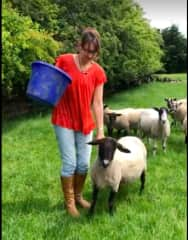 Shelley feeding some of the 30 sheep we looked after in UK