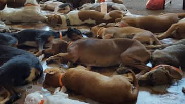 A busy day with Spay Panama - dealing with overpopulation, one dog/cat at a time.