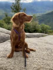 We recently took Luna on a trip to the White Mountains in New Hampshire, and she really enjoyed her first hikes!