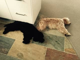 Red & Barney, pooped after a big walk!
