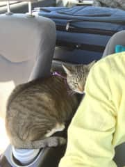 This is Shelby. She was my kitty for many years. This is us driving from Sedona, AZ to Colorado. She was a sweetheart.