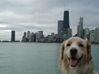 Happiest city dog