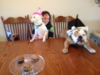 Cheese burger birthday party for Our Yorkie our rescue husky and long term Bulldog pet sit at our house