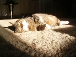 My dear Pucca... She loved a sun bath!