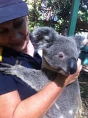 Having a cuddle with Mr Koala