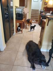 The gangs all here, actually we are missing about 6 cats.