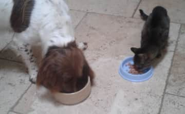 Supper time with 11 yr old Girl Cat (House sit in Dartmouth)