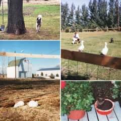 Our hobby farm years (1995-2014)