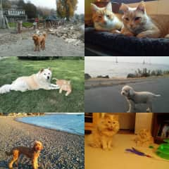 Pets I have sat for