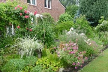 Our beloved garden.