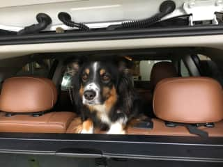 Always ready for a ride in the car.