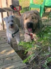 Charlie and his best friend Finn