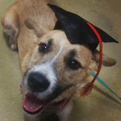 My sweet pup Lucy, when she graduated from obedience school! I adopted her almost three years ago after she was abandoned during Hurricane Irma.