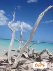 Travel. Paradise on a beach in Cuba