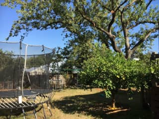 The Backyard with trampoline and jungle gym
