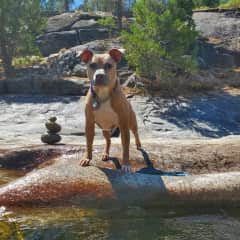 Swimming with Jake at the river.