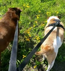 Rocky & Promise as we explore the wildflowers