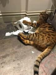 Hilarious cat antics.