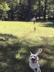 Dog sitting my grand dogs.  Running wild and free at the farm.