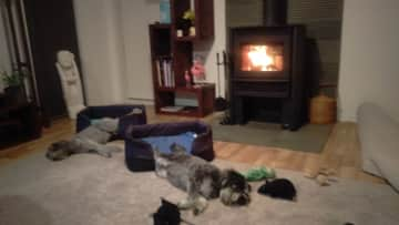 The boys relaxing by the fire