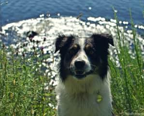 Monty - loves sticks and balls!