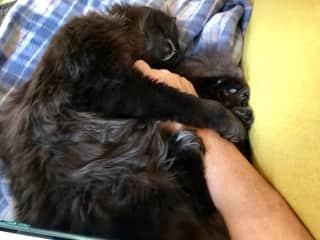 Taz loves a snuggle
