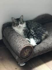 My cat Eowyn