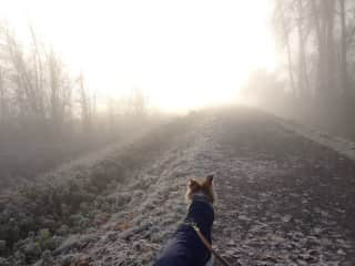 A chilly morning walk with a Borzoi named Luna in Port Coquitlam, British Columbia, Canada.