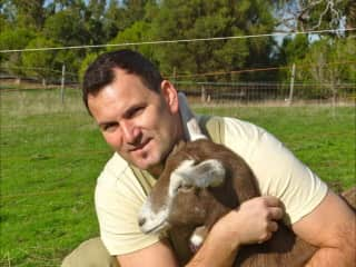 Eddie Goat Sitting in Tasmania, Australia.