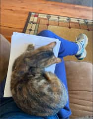 Working from home with Lucy the cat, Republic, WA.