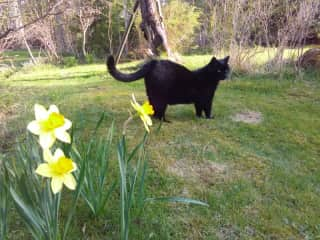 Rose in the spring garden