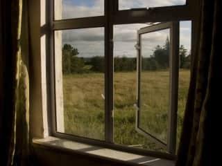 Window on the Backyard