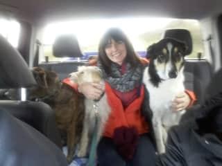 Jane, Dexter, Luna & Woody off for a trip!
