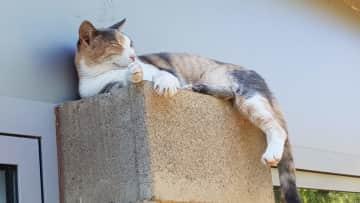 Maisy on pillar outside kitchen