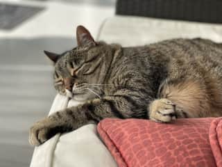 """Napping in style. Minga is a love bug. A real """"mother"""" of a cat. A bit shy at times, but once she likes you, she will take care of you."""