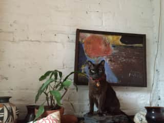 NEW-YORK -  I have taken care of Bisou, the Burmese cat, for many years, looking after him and his owners house.