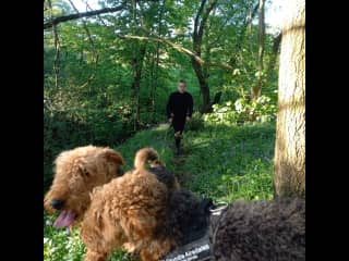 Walking Elmer and Tulip in the woods behind our house
